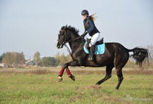 jazda konna Best Horses